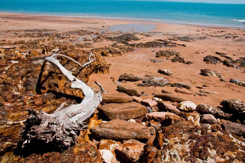Côte de Darwin images libres de droits