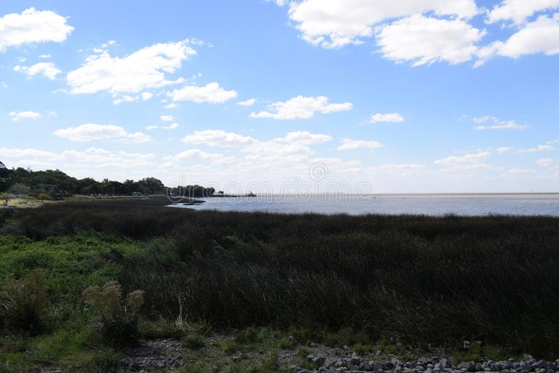 Côte de l'océan envahi avec l'herbe, secteur écologiquement propre photo stock