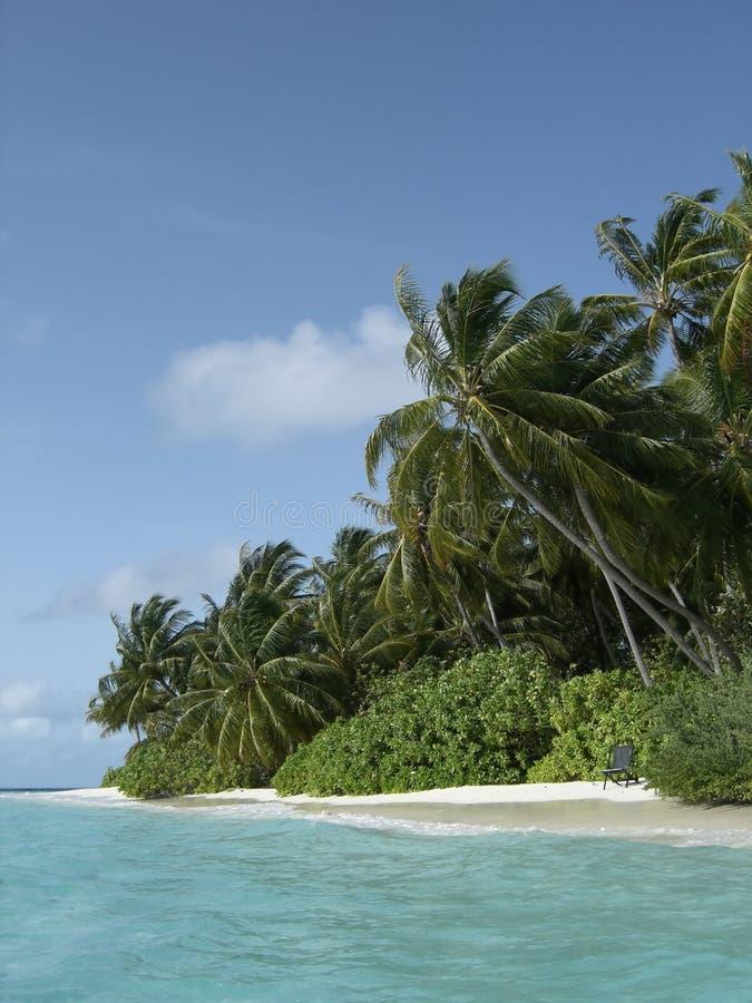 Côte maldivienne d'île photos libres de droits
