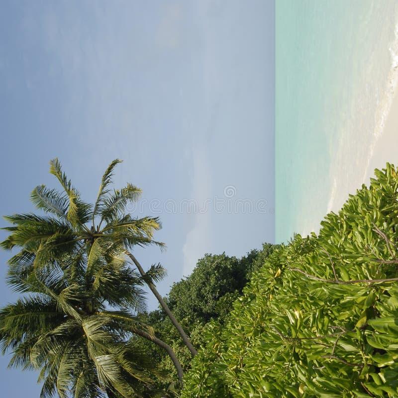 Côte maldivienne d'île photographie stock