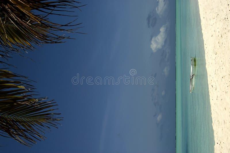 Côte maldivienne d'île image stock