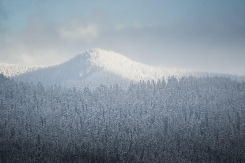 Côtes de l'hiver de Milou photographie stock libre de droits