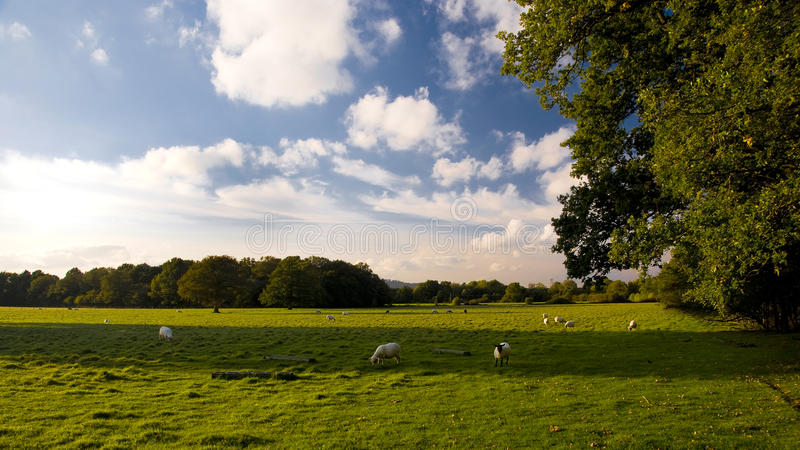 Côtes de Surrey, Angleterre. photo stock