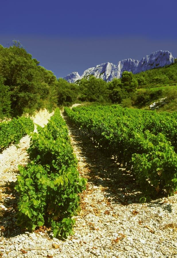 Côtes du Rhône vineyards dentelles de montmarail Vaucluse image stock
