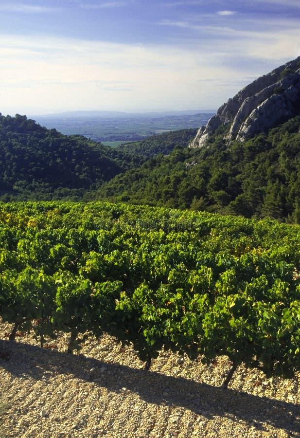 Côtes du Rhône vineyards dentelles de montmarail Vaucluse prouvé images libres de droits
