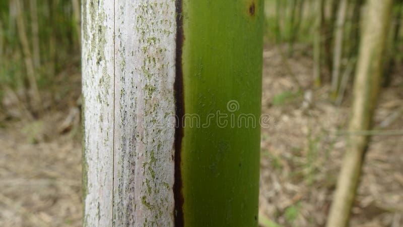 C'è natura morta dal lato di un bambù che ha appassito fotografia stock