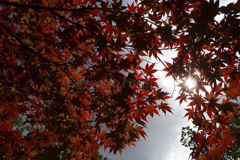C'è sempre una pace di luce solare dietro le nuvole fotografia stock libera da diritti