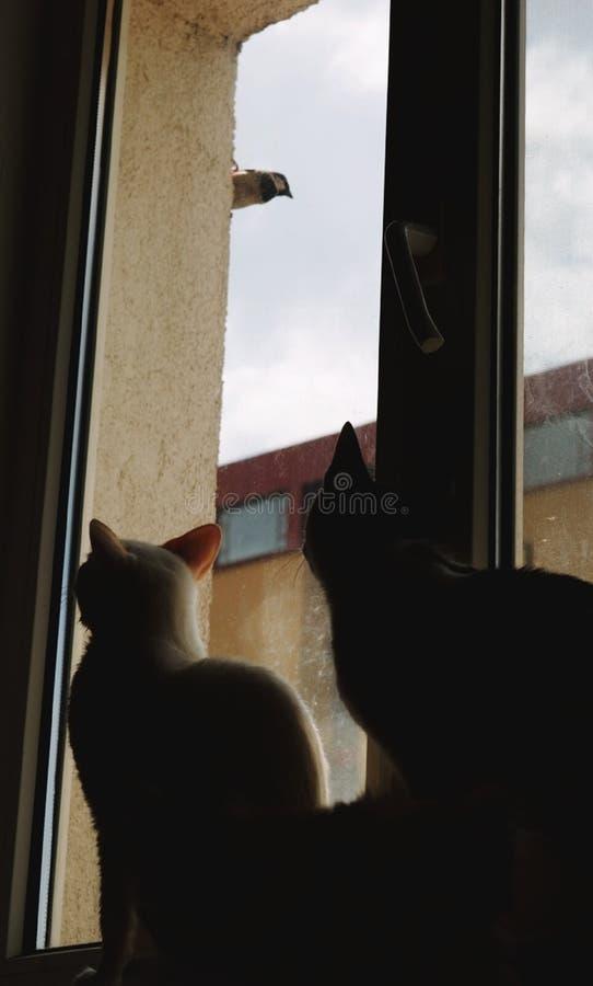 C'était un vrai dialogue là, me croient Mes chats fous et l'oiseau les ennuie, en conséquence M merveilleux images stock