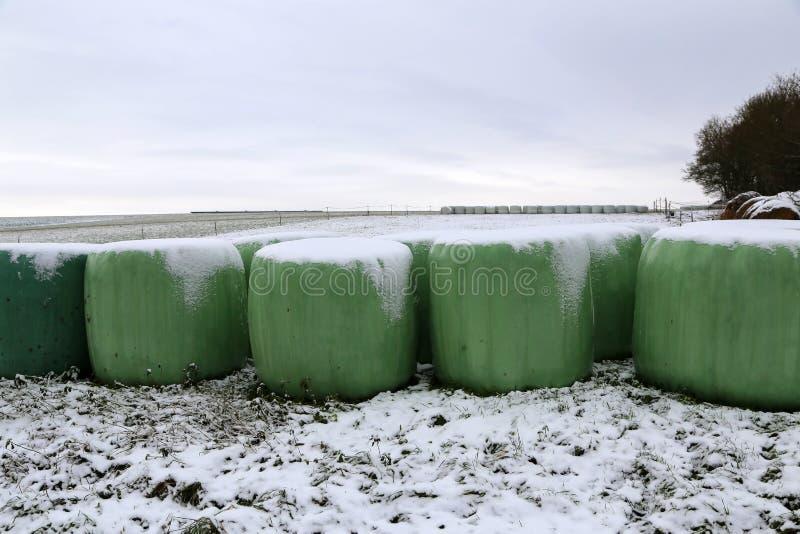 33c 1月横向俄国温度ural冬天 劳斯用饲料在冬天 图库摄影