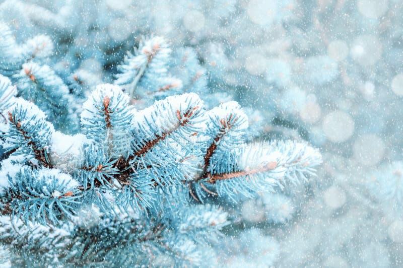 33c 1月横向俄国温度ural冬天 在冬天降雪,冬天森林自然,文本的自由空间特写镜头下的松树分支  库存图片