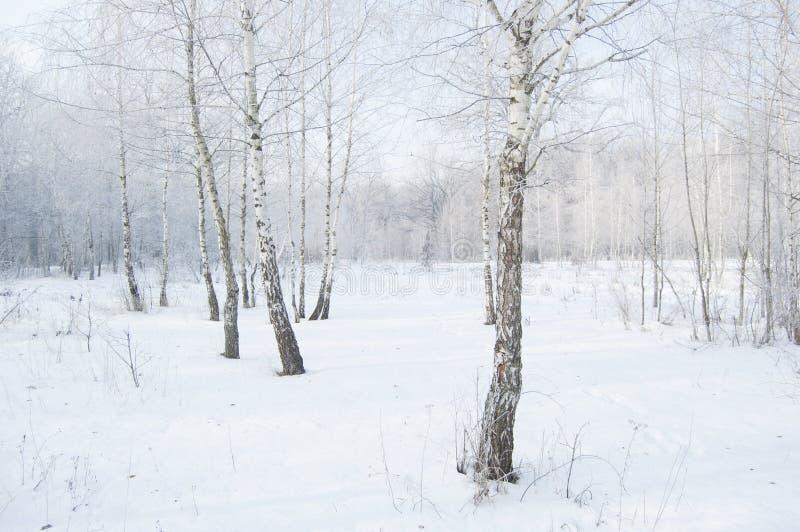 33c 1月横向俄国温度ural冬天 桦树叶子绿色树丛可以 冻结的林木和分支在霜白色大气 免版税库存照片