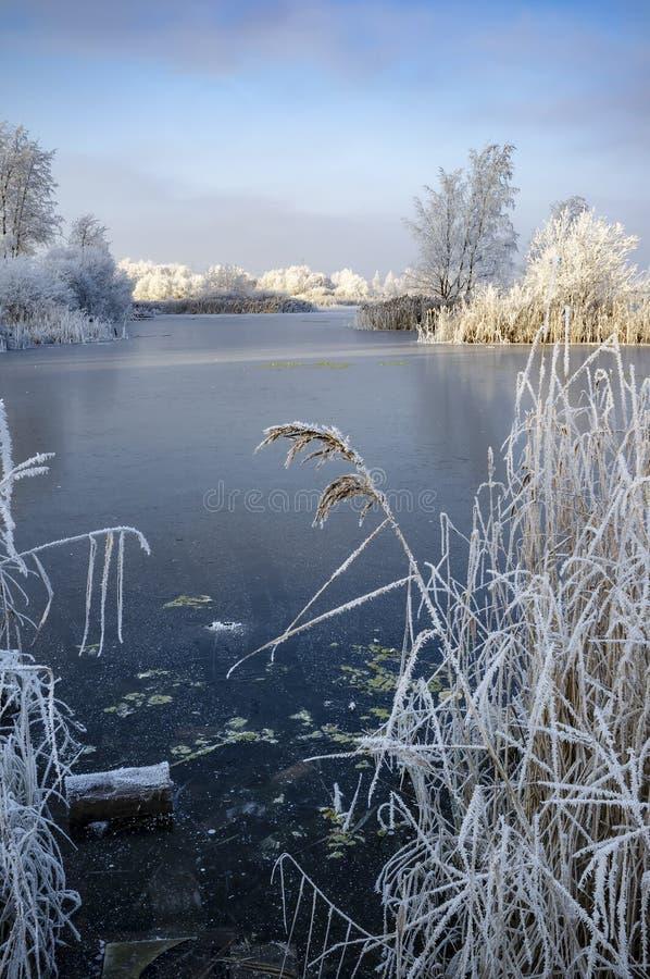 33c 1月横向俄国温度ural冬天 湖用稀薄的冰盖,在那里银行是芦苇和树在树冰,衬托 免版税库存图片