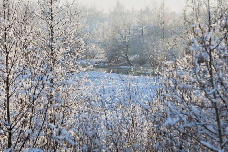 33c 1月横向俄国温度ural冬天 白俄罗斯语冬天 在树的第一霜在晴朗的天气 免版税库存图片