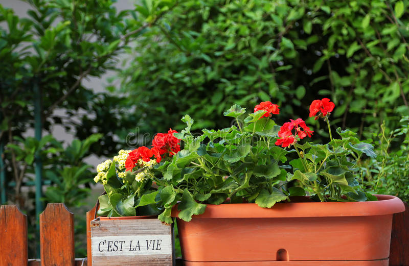 C'est la vie garden. Beautiful house garden with a french saying flowerpot stock images