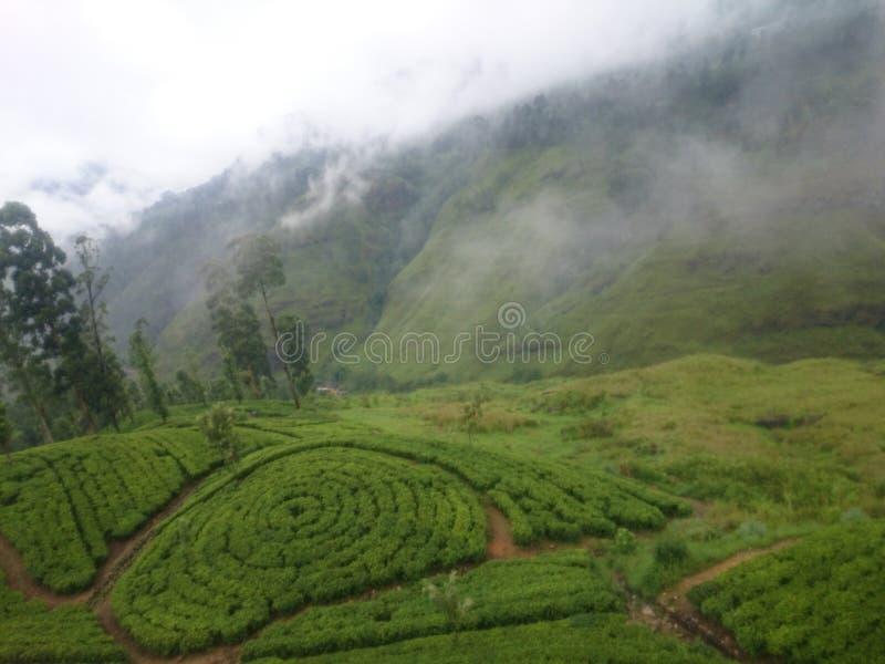 C'est un domaine de thé au Sri Lanka photographie stock libre de droits