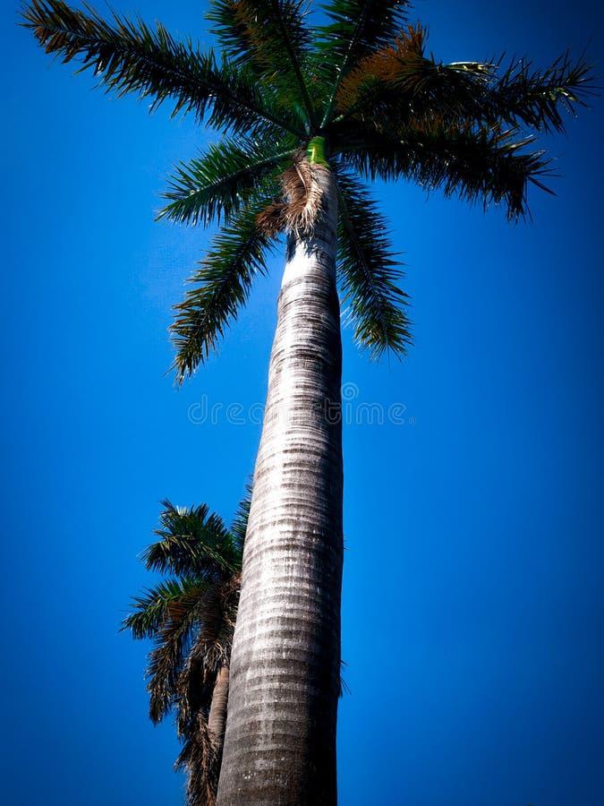C'est un grand arbre images stock