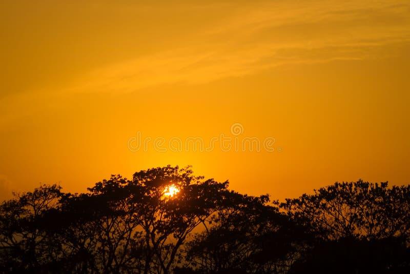 C'est une image quand le soleil me place l'a capturé derrière d'un arbre le soleil semble stupéfiant photos stock
