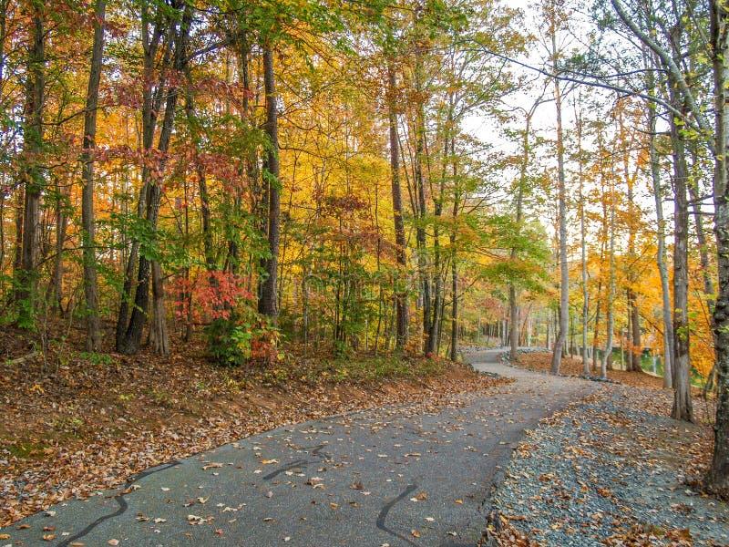 C. G. Hill Memorial Park. Colorful fall foliage along a walking trail at C. G. Hill Memorial Park in Pfafftown, North Carolina stock image