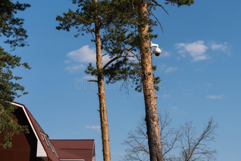A c?mara de seguran?a do CCTV ? montada em um tronco de ?rvore no conceito da floresta do controle total e da fiscaliza??o consta imagens de stock