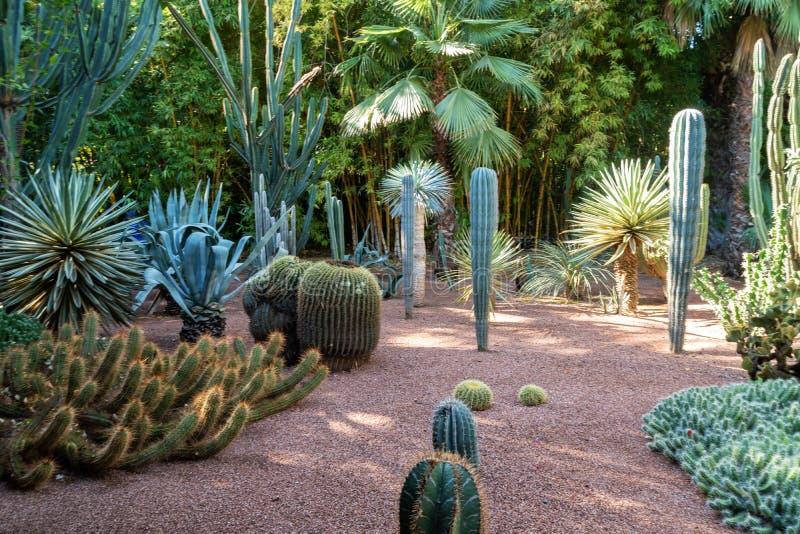 C4marraquexe, Marrocos - 11, 2019: Vários cactos no jardim botânico de Jardin Majorelle situado em C4marraquexe, Marrocos imagens de stock