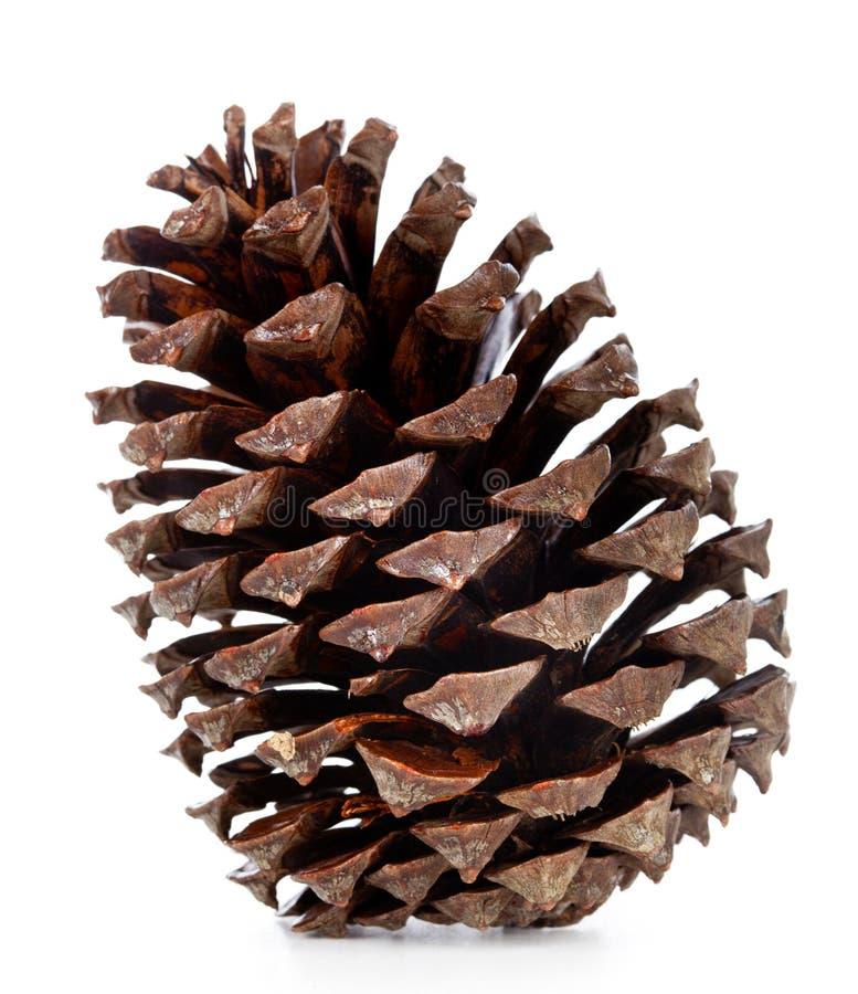 Cône de pin de Brown photos libres de droits