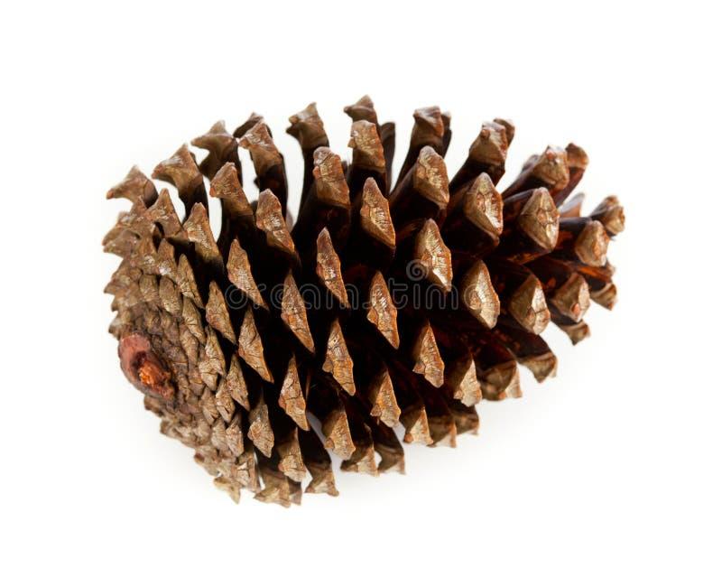 Cône de pin de Brown photo stock