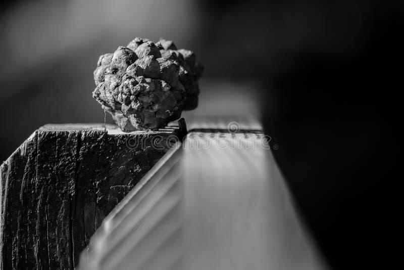 Cône de pin noir et blanc images libres de droits