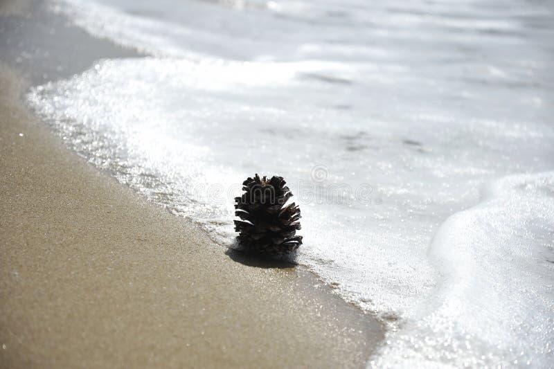 C?ne de pin sur la plage sablonneuse pr?s de l'eau Concept de relaxation, m?ditation, naturel, ?cologique, bigoterie photo libre de droits