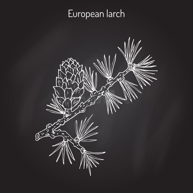 Cône et branche de mélèze illustration stock
