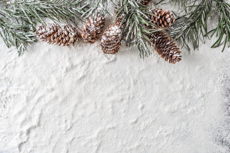 Cônes de branche et de pin de sapin de Milou sur le fond d'hiver images stock