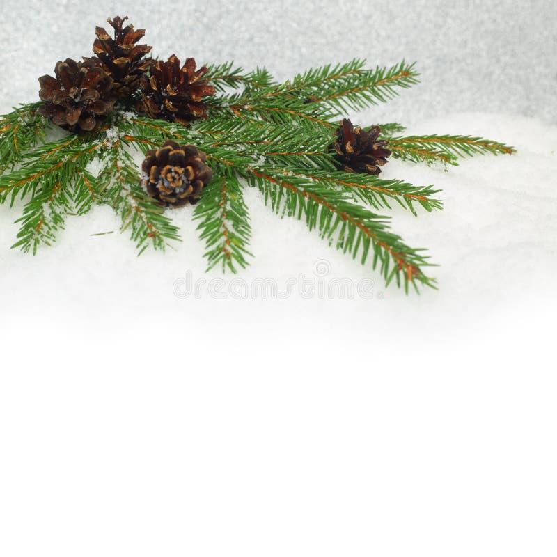 Cônes de pin et branche de sapin sur la neige images stock
