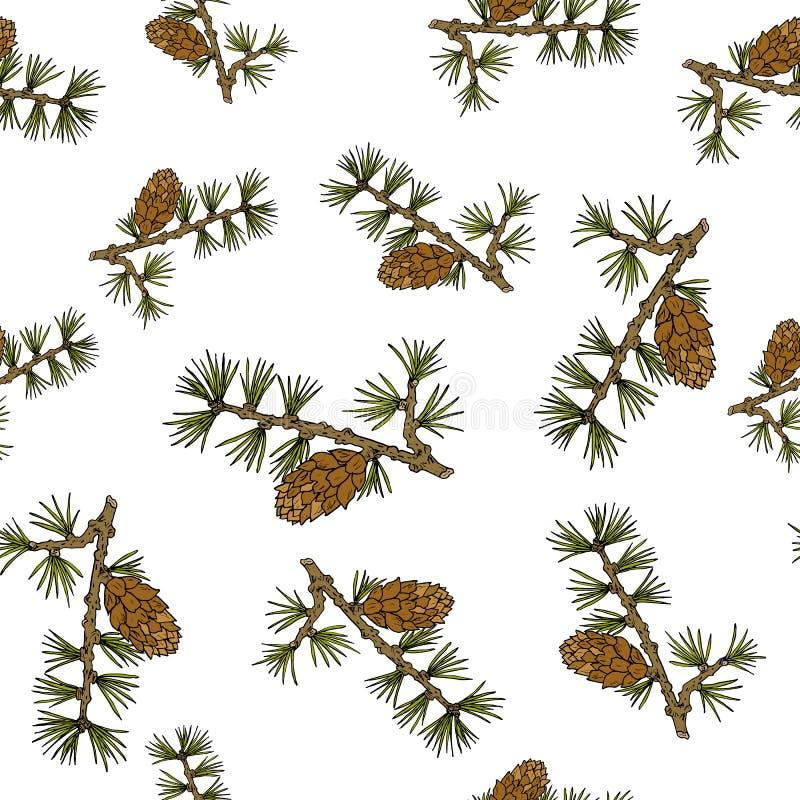 Cônes et branches de mélèze illustration libre de droits