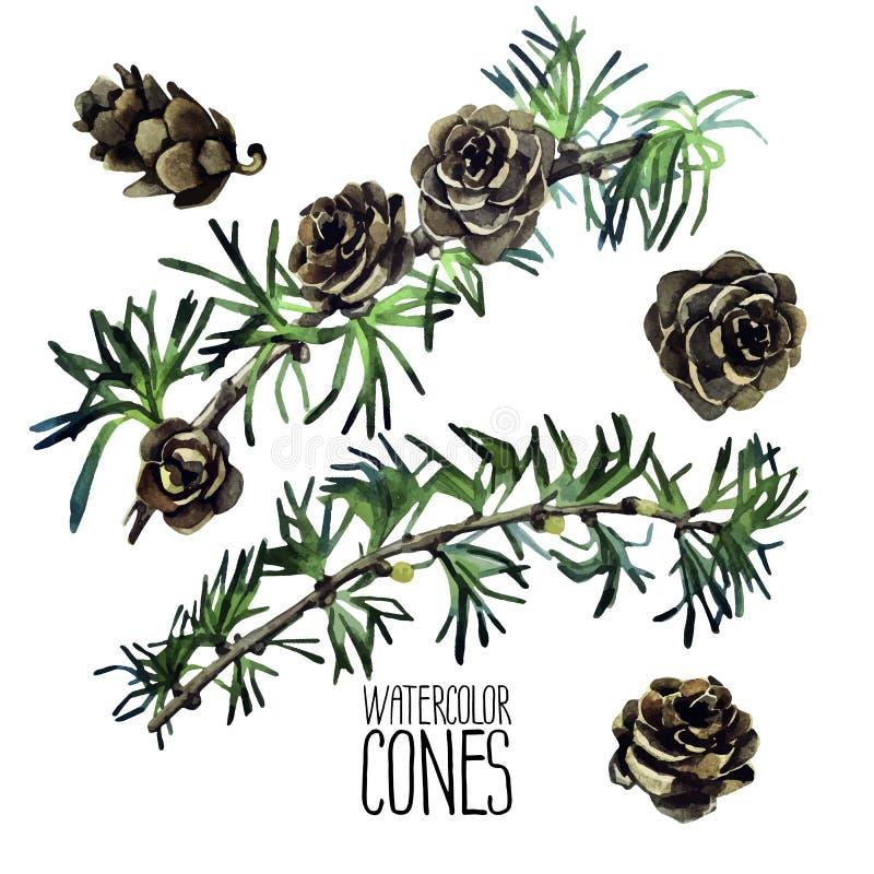 Cônes et branches de mélèze d'aquarelle illustration libre de droits