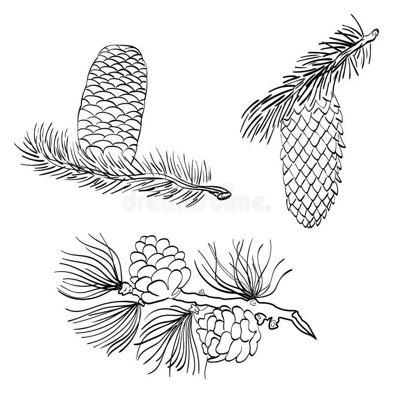 Cônes et mélèze tirés par la main de pin Cônes de pin de croquis d'isolement sur le blanc illustration de vecteur