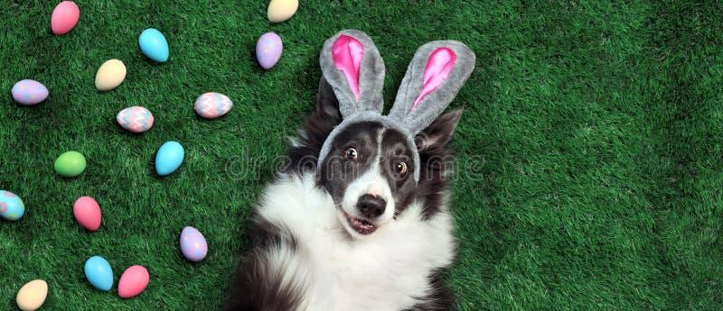 C?o com as orelhas do coelho cercadas por ovos da p?scoa fotos de stock royalty free