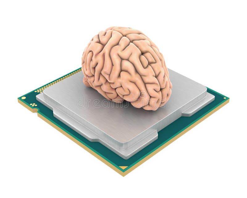C.P.U. процессора компьютера при изолированный человеческий мозг бесплатная иллюстрация