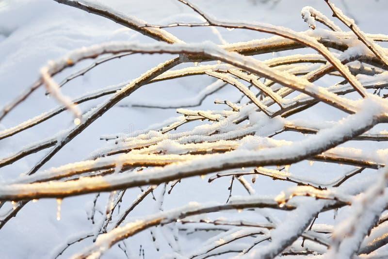 C?pia-espa?o bonito do inverno Scene Ramos de árvore sob a neve e o gelo foto de stock