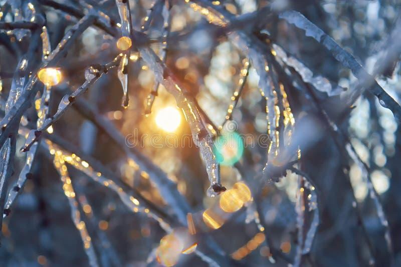 C?pia-espa?o bonito do inverno Scene Ramos de árvore sob a neve e o gelo foto de stock royalty free