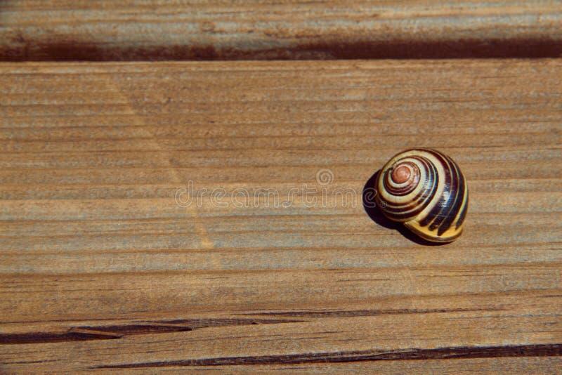 C?scara del caracol en el tablero de madera Visi?n superior fotografía de archivo