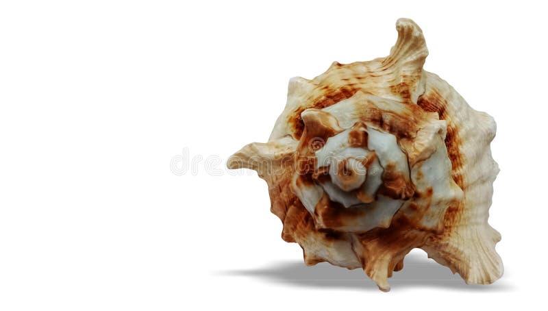 C?scara del mar aislada en el fondo blanco imagen de archivo libre de regalías