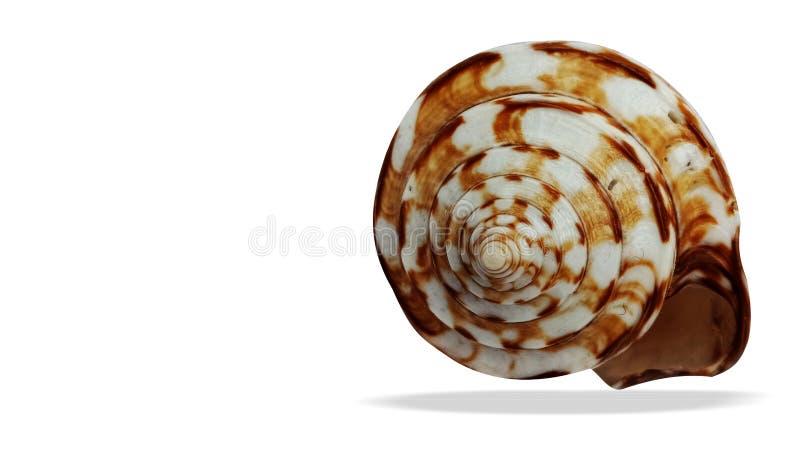 C?scara del mar aislada en el fondo blanco imagenes de archivo