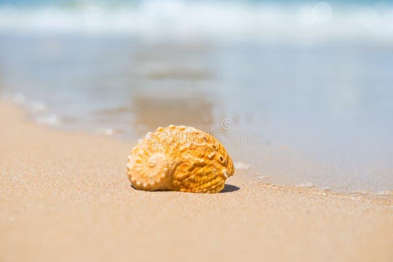 C?scara del mar en la playa de la arena fotografía de archivo
