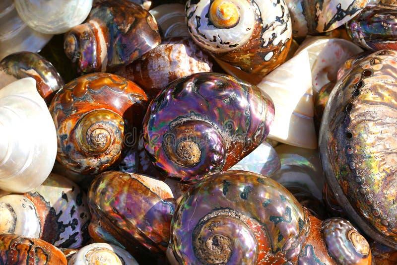 C?scaras coloridas hermosas reci?n pescadas en Herakleio imagenes de archivo