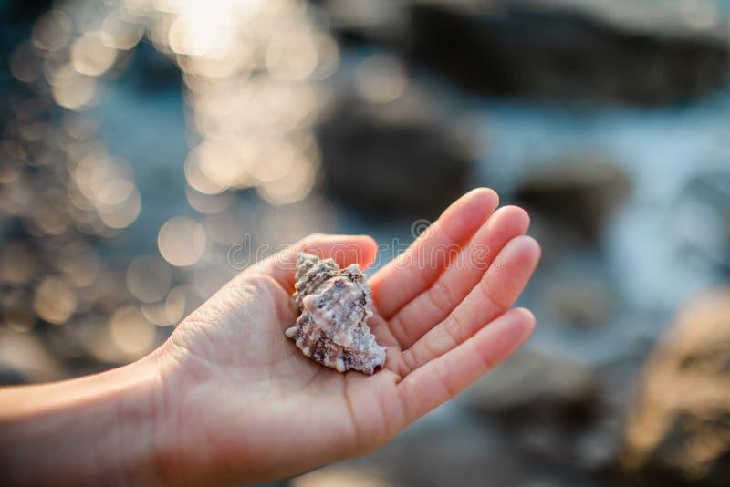 C?scaras del mar en la mano foto de archivo