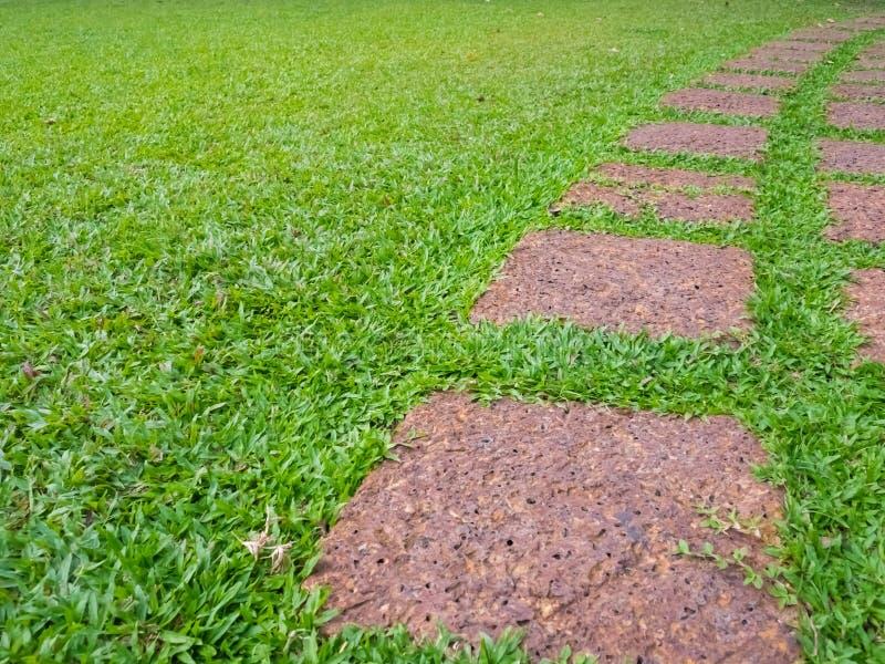 C?sped verde, camino hermoso del trampol?n con el c?sped verde, calzada en el jard?n, dise?o del paisaje del jard?n fotos de archivo