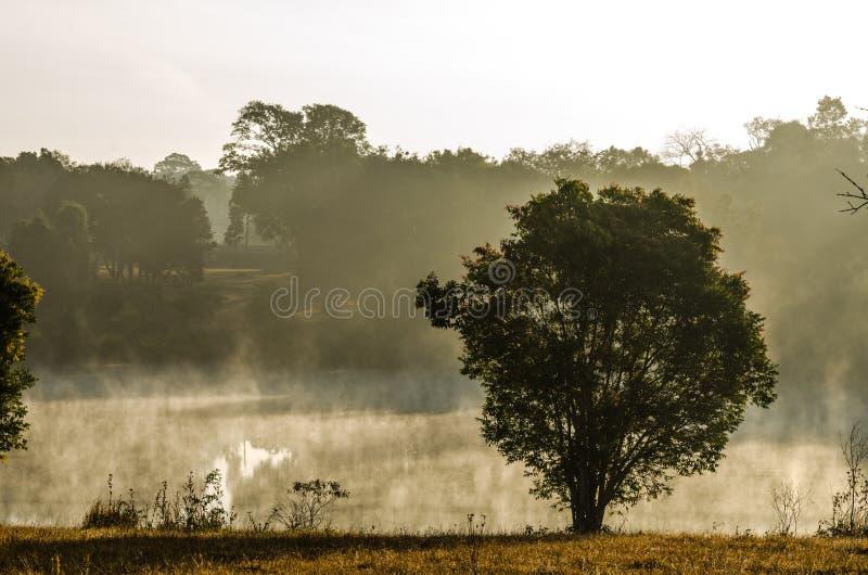 Côté d'arbre la lagune en brume de matin photo stock