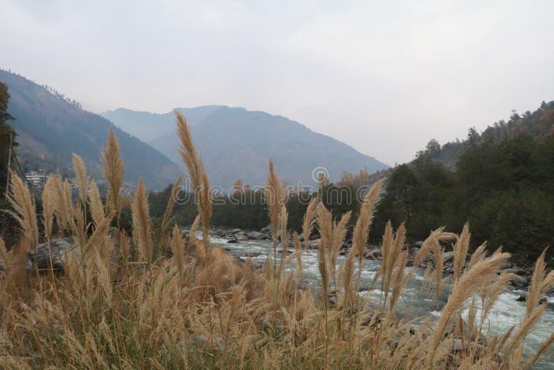 Côté de rivière photos stock