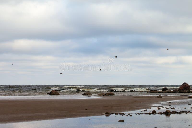 Côte baltique image stock