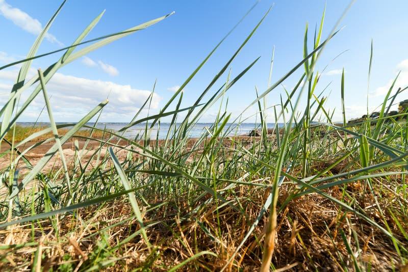 Côte baltique photos libres de droits