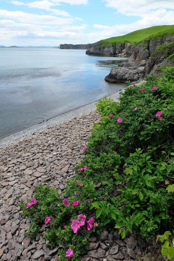 Côte, fleurs image libre de droits